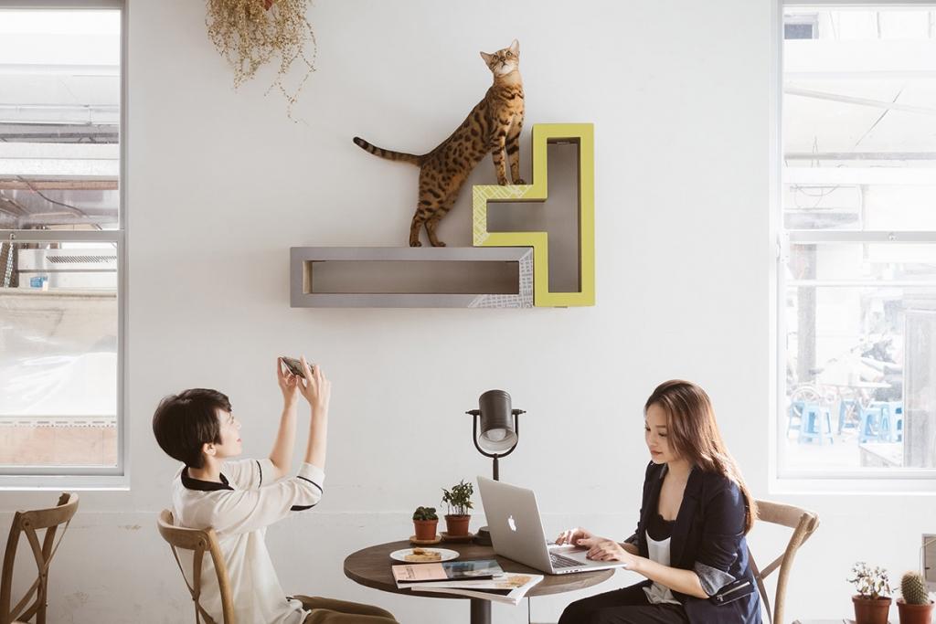 Gato alinatur