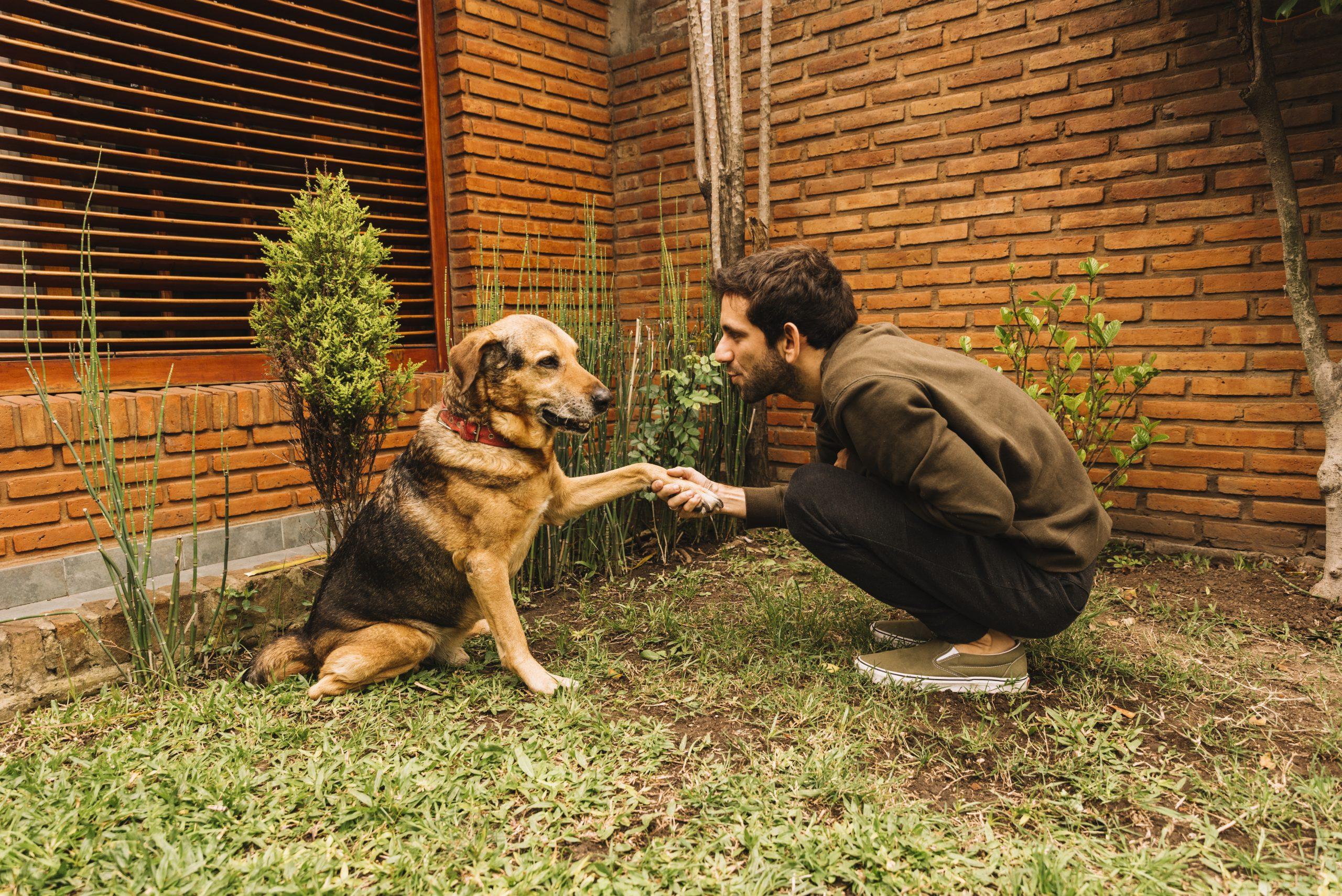 lovely-dog-posing-in-the-garden